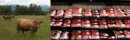 Where the beef industry wants you to believe your meat comes from.