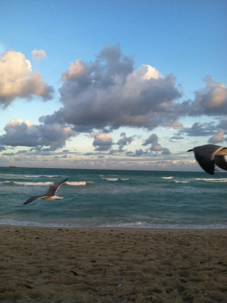 A lot of seagulls, and they aren't camera shy.