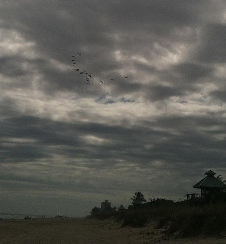 florida-birds-leave
