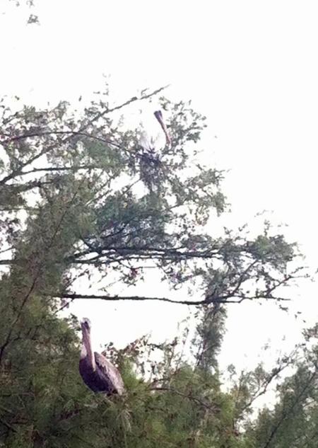 florida-birds