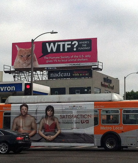 wtfgrumpycat_billboard600
